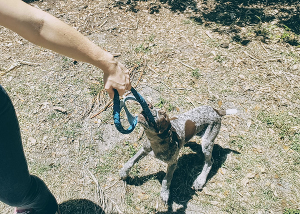 Tug of war can teach your puppy self-control if done properly.